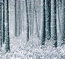 9.12.2011: In the Freezing Forest II by Petri Volanen