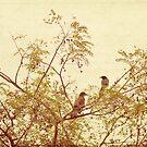 birds in trees by beverlylefevre