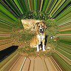 WeatherDon2.com Art 203 by dge357