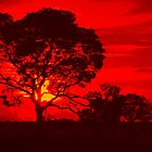 Sunset in red by Cleber Design Photo