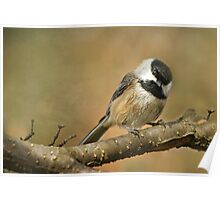 The Ever Cheerful.... Black-capped Chickadee Poster