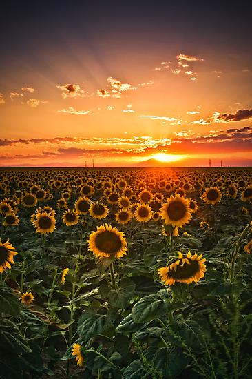 Light Of The Plains by John  De Bord Photography