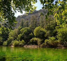 River Sorgue by Christopher Cullen