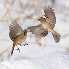 """Cat Fight"" or ""Battle of Angels"" by Alinka"