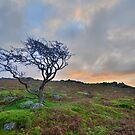 Dartmoor: The Lone Tree at Maiden Tor by Rob Parsons