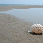 Seashell on the sand at the ocean beach by Anton Oparin
