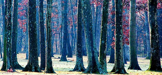 A Gathering of Trees by AngieDavies