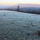 Ozark Frosty Morn by NatureGreeting Cards ccwri