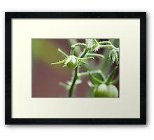 Killer Green Tomatoes Framed Print