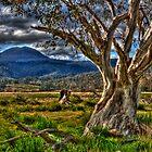 Tasmanian  Scenery  2012 by Kip Nunn