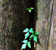 Ivy on a Tree by joevoz