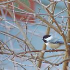 Winter Chickadee by perpetualphoto