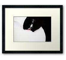 Black-necked swan Framed Print