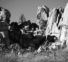 Life & Death In Joshua Tree National Park by Ron Hannah