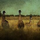 So Why Did the Emu Cross the Road?.... by Wendi Donaldson