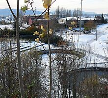 The Fish Ponds in Downtown Bellingham by rferrisx