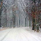 Snowy road by tanmari