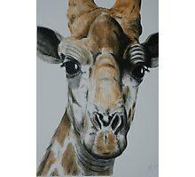 Tinted Charcoal Giraffe Photographic Print