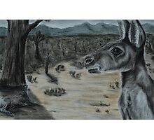 Australian Bush Scene (tinted charcoal) Photographic Print