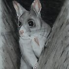 Brushtrail Possum (tinted charcoal) by gogston