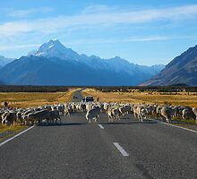 High Country Sheep Farming by Odille Esmonde-Morgan