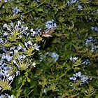 Nightlife of a Hummingbird Moth by theweirdo666