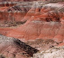 The Painted Desert  8024 by Bo Insogna