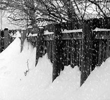 Blizzard © by Dawn M. Becker