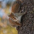 Up a Tree by by M LaCroix