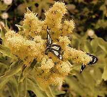Butterflies And Butterfly Weed by Sandra Foster
