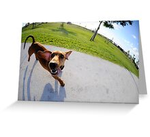 Weiner Dog In The Park Greeting Card