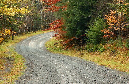 Empty forest road curve at autumn time  by Anton Oparin
