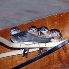 SWALLOWS ON THE WIRE by Heidi Mooney-Hill