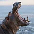 Hippo jaws by Will Hore-Lacy