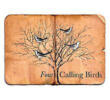 Four Calling Birds Photographic Print