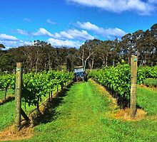 Southern Highlands Vineyard by Jorge's Photography