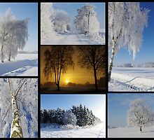 Winterland by Aviana