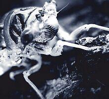 The Locust 2 by garamer