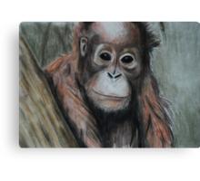 Tinted charcoal orangutan Canvas Print