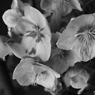 Monochrome orchids by tdash