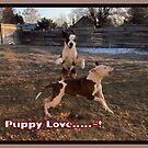Buster and Sweetie- Fun, Fun, Fun~!!!! by Brenda Dahl
