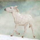 Donkey in the sky by Rachele Totaro