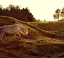 Welsh Mountain Pony  by HollyRuthven