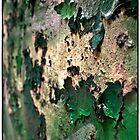 A wall that has seen better days by Forrest Harrison Gerke