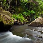 Mokoroa Falls Collection # 8 by Michael Treloar