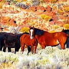Wild Horses in Nevada by SB  Sullivan