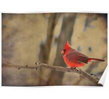 Cardinal on a Branch Poster