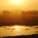 Cows in the Mist by Mjay