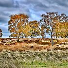 Autumn on Cannock Chase by Jennie Anderson