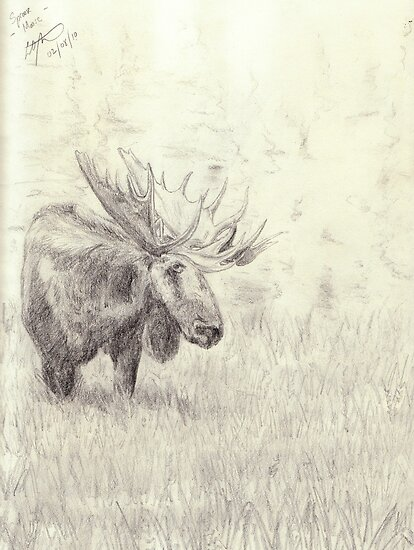 Lonely moose sketch - pencil by gogston